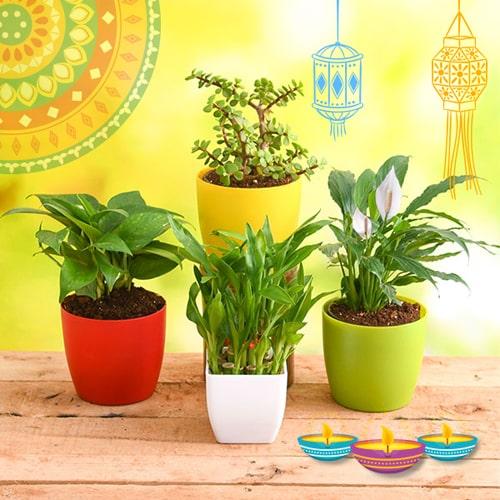 pw-best-4-plants-bring-goodluck-and-prosperity.jpg