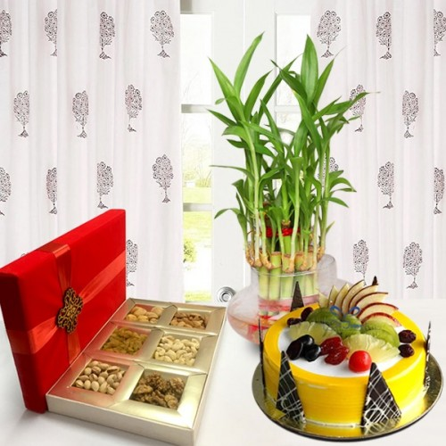 pw-fruit-cake-dry-fruit-and-lucky-bamboo.jpg