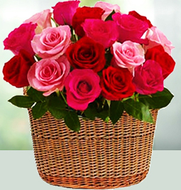 Roses to Philippines