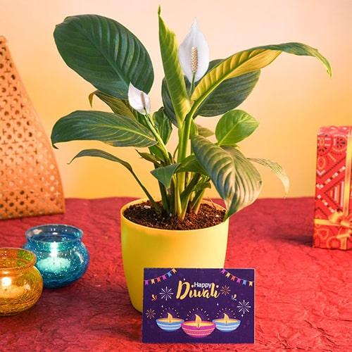 Peace Lily N Diwali Greeting Card