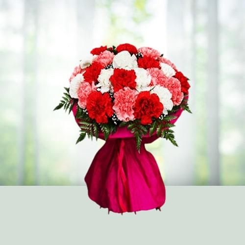 Carnations Carnival