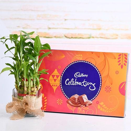 2 Layer lucky Bamboo Plant N a Cadbury celebrations
