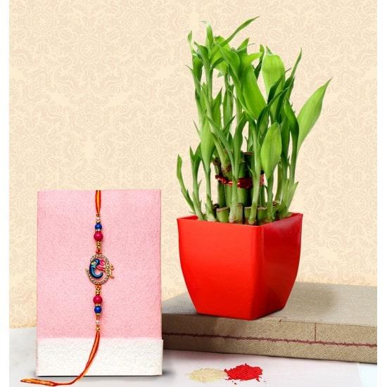 Designer Rakhi and a Lucky Bamboo Plant