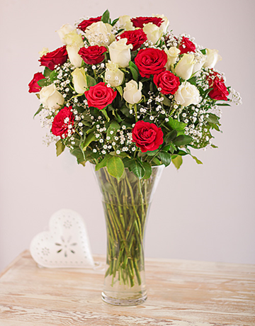 Full Red and White Roses in a Vase