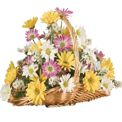 Lovely Daisies Basket