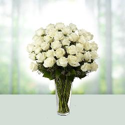 Sacred white roses