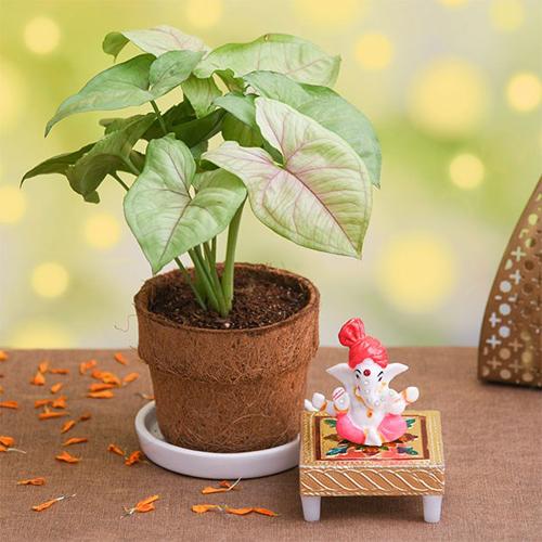 Syngonium Plant N Lord Ganesha Idol