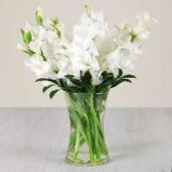 White Gladiolus in a Glass Vase