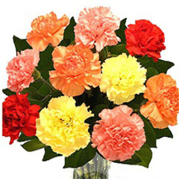 10 Mix Carnations in Vase