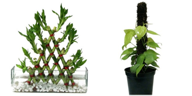 Read Blog On Bonsai Plants As Gifts For Decor Lovers Phoolwala