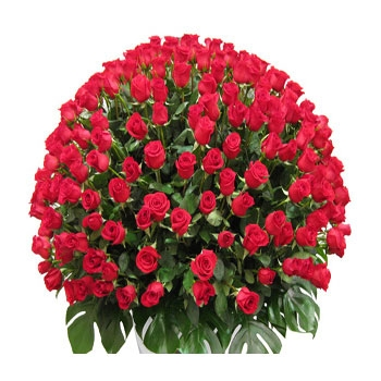 pw-500-red-roses-bunch-to-india.jpg