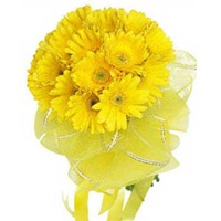 12 Yellow Gerberas