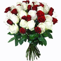 16 Red and White Roses