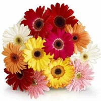 Flowers Bouquet of 12 Mix Gerberas