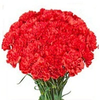 Flowers Bouquet of 35 Red Carnations - Valentine Gifts to India