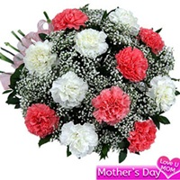 Flowers Bouquet of 12 pink and white carnations