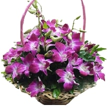 Basket of Orchids